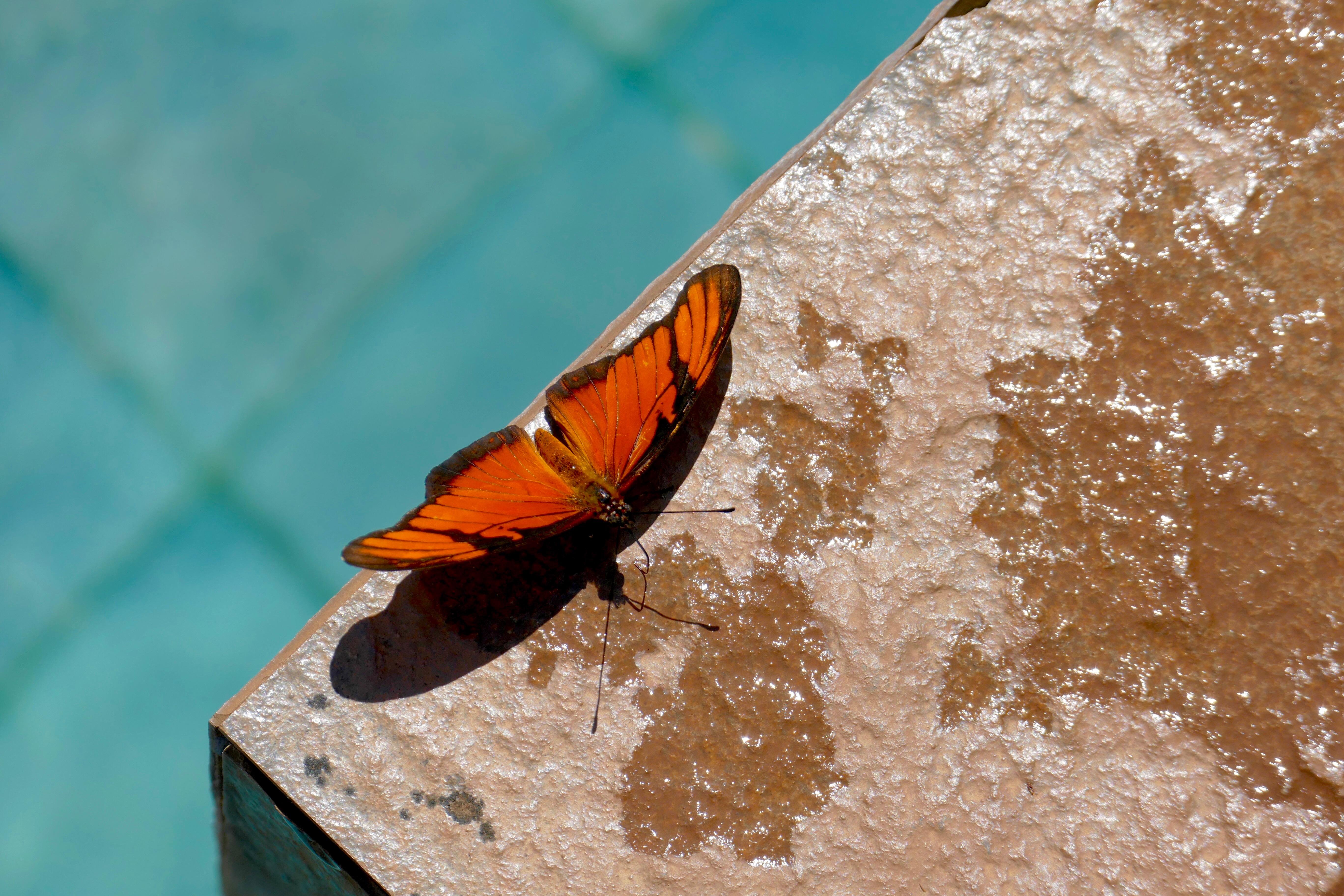 Loí Suites Iguazu Hotel fjäril