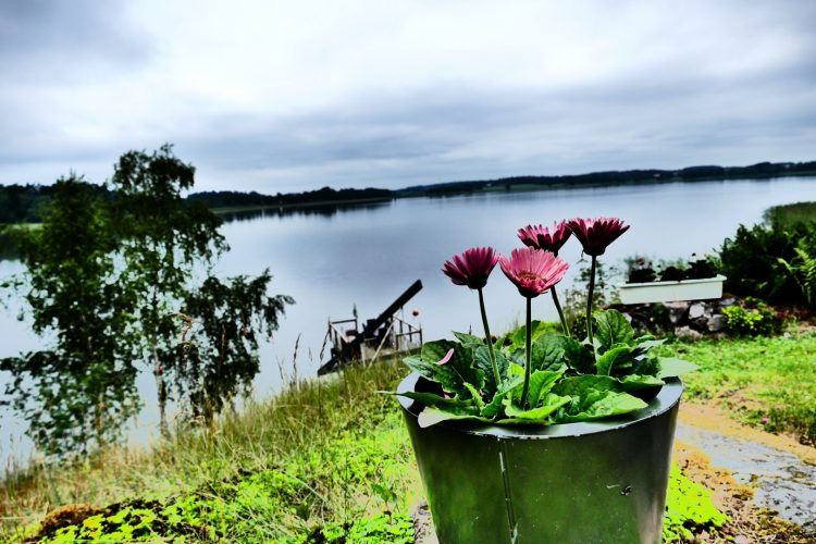 Swedish Midsummer 2016