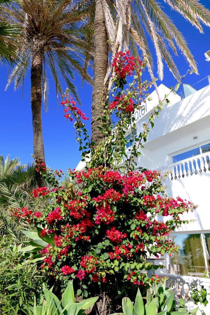 Spanska blommor