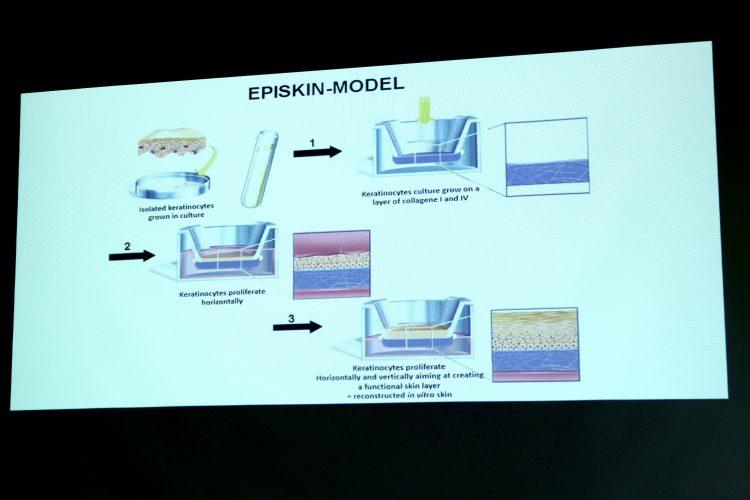 episkin modell