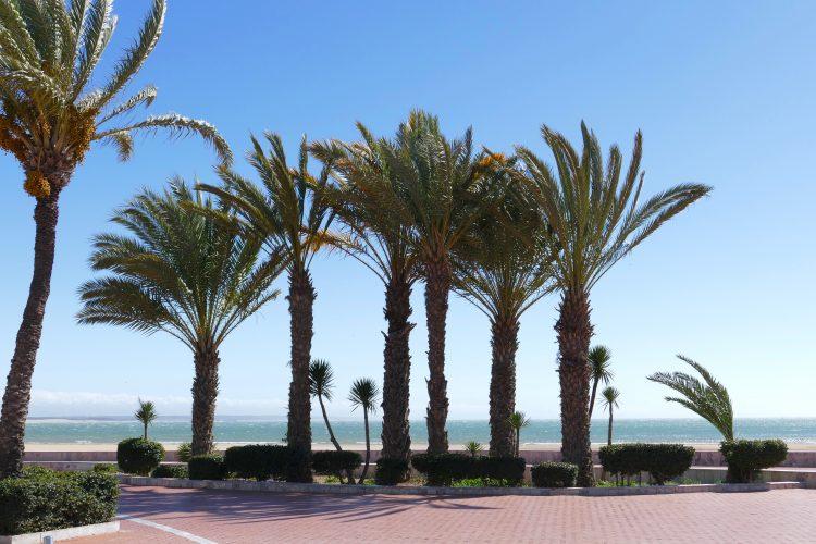 palmer i marocko